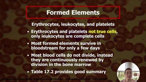 Thumbnail for entry Blood II - Erythrocytes