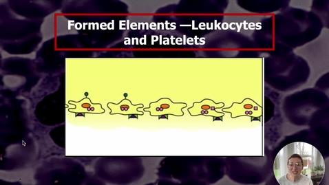 Thumbnail for entry Blood V - Leukocytes