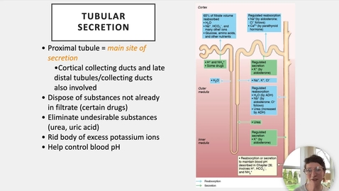 Thumbnail for entry Ch 25 VI - Tubular Secretion