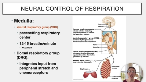 Thumbnail for entry Ch 22 XII - Regulation of Respiration