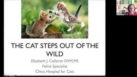 Thumbnail for entry New Cat Science: Session 1