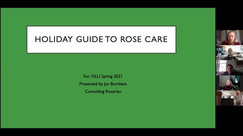 Thumbnail for entry Holiday Rose Guide