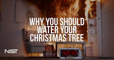 Why You Should Water Your Christmas Tree Nist