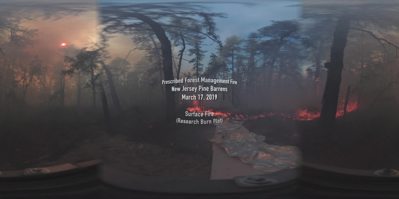 360° Video of Surface Fire during a Prescribed Burn in the New Jersey Pine Barrens on March 17, 2019