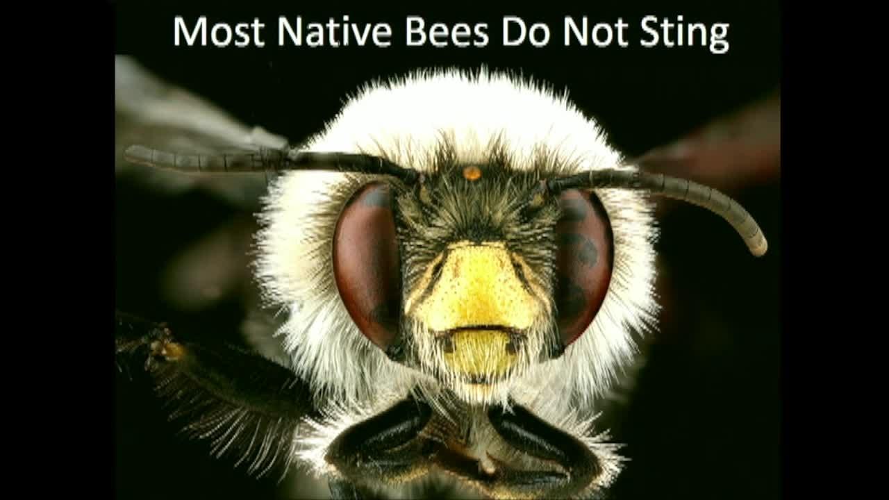 NIST Colloquium Series: Are Bees Declining? Measuring the Status of 4,000 U.S. Bee Species