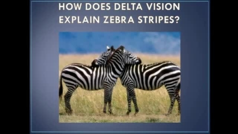 The Zebra's Stripes- A New Theory of Animal Vision