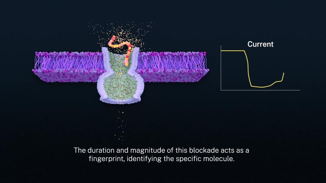 Tuning a Nanopore Biosensor
