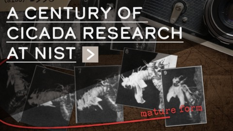 A Century of Cicada Research at NIST
