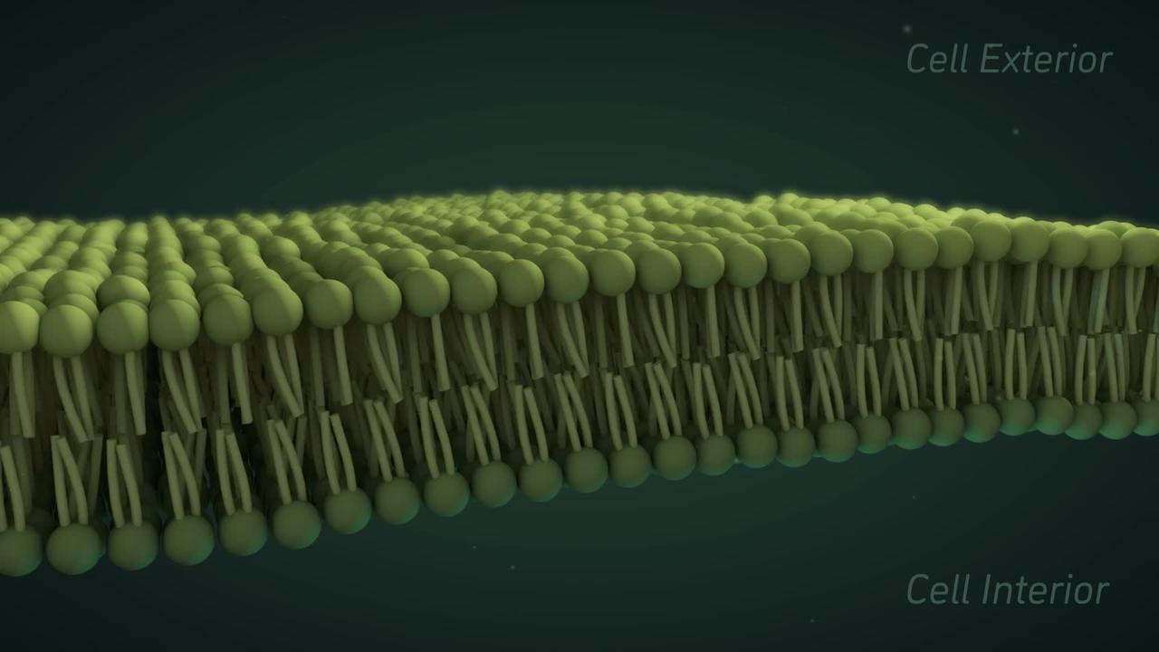 Cell Membrane Viscosity