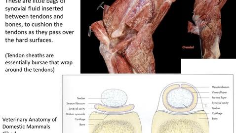 Thumbnail for entry VM 516-Synovial bursae Video