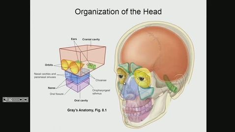 Thumbnail for entry ANTR510 (008) Introduction to the Head & Neck
