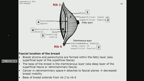 Thumbnail for entry ANTR510 (027) Anatomy of the Breast