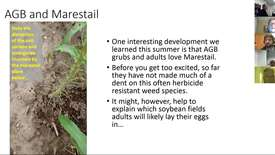Thumbnail for entry Virtual Breakfast 4/12/18: Asiatic Garden Beetle and Marestail