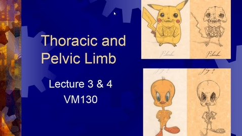 Thumbnail for entry Week 3 Thoracic Limb & 4 Pelvic Limb