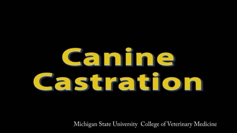 Thumbnail for entry SCS 625-Canine castration