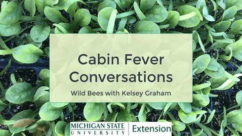 Thumbnail for entry Cabin Fever Conversations - Wild Bees with Kelsey Graham