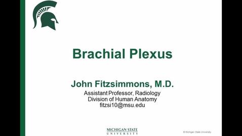 Thumbnail for entry ANTR510 (020) Brachial Plexus Drawing