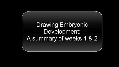 Thumbnail for entry Drawing Embryonic Development