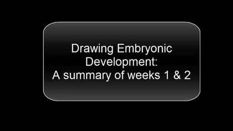 Thumbnail for entry ANTR510 (013) Drawing Embryonic Development
