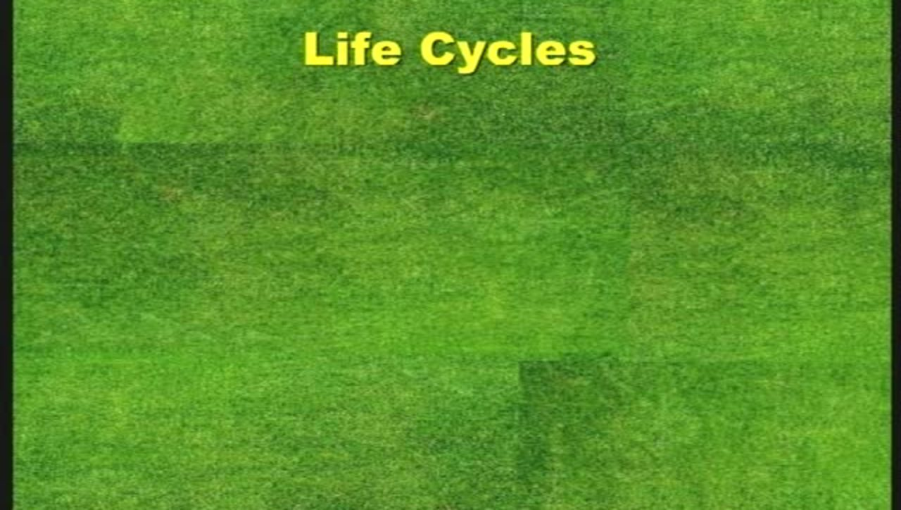 Growth and Development Part 4 - Life Cycles