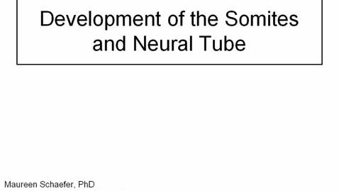 Thumbnail for entry Early Embryology: Somites and Neural Tube