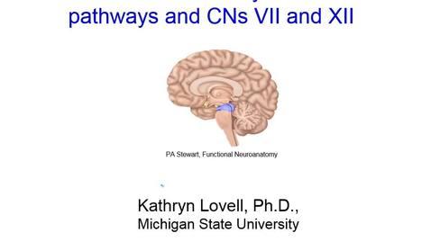 Thumbnail for entry ABLE_15B-Brainstem_Lovell