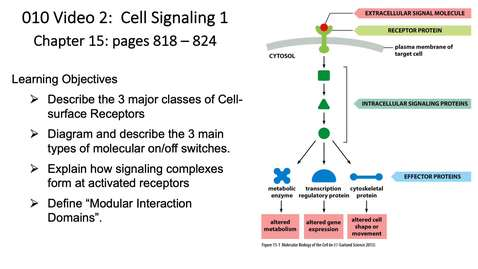 Thumbnail for entry 010 Video 2 Cell Signaling 1