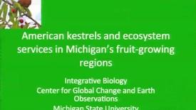 Thumbnail for entry American Kestrels Saving Michigan Berries From Predation