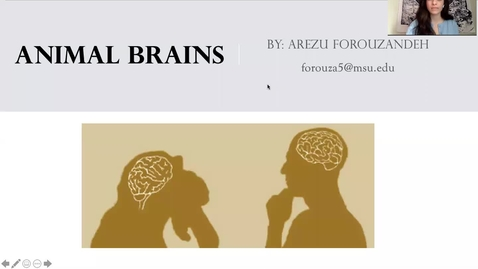 Thumbnail for entry Animal Brains by Arezu Forouzandeh