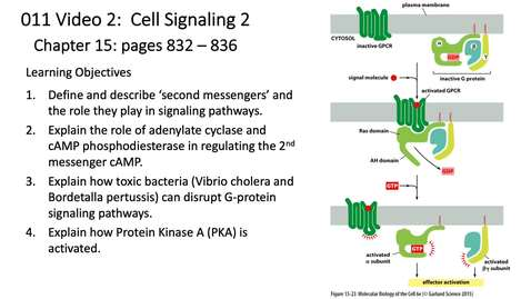 Thumbnail for entry 011 Video 2 G-protein Coupled Receptors 2