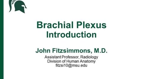 Thumbnail for entry ANTR510 (019) Intro to the Brachial Plexus