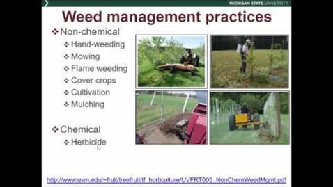 Thumbnail for entry Orchard weed management and practices impacting beneficial and pest insects