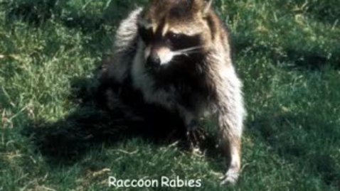Thumbnail for entry VM_544_09302010_Rabies_B__Bartlett_