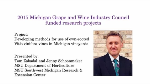 Thumbnail for entry Developing methods for use of own-rooted Vitis vinifera vines in Michigan vineyards by Tom Zabadal