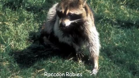 Thumbnail for entry VM_544-09302010-Rabies-B-Bartlett
