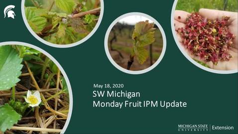 Thumbnail for entry IPM Meeting - May 18 2020