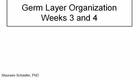 Thumbnail for entry Early Embryology: Germ Layer Organization