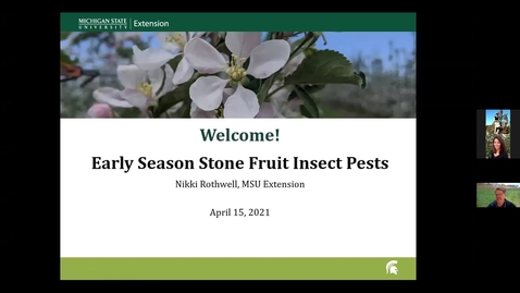 Thumbnail for entry Early Stone Fruit Insect Pests 2021