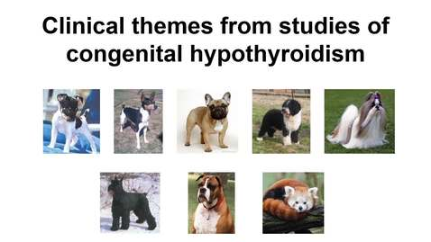 Thumbnail for entry PDI 634-Clinical themes from studies of congenital hypothyroidism