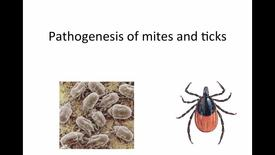 Thumbnail for entry Week-Eleven-HM-881-Tick-Mites