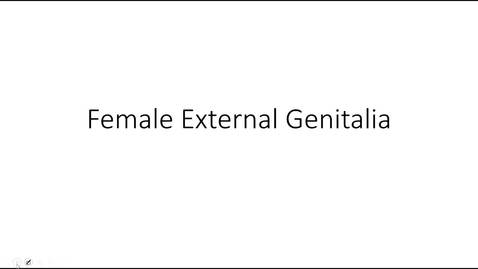 Thumbnail for entry Female External Genitalia Fall 2020