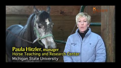 Thumbnail for entry VM 515-Introduction to Horse Handling and Restraint