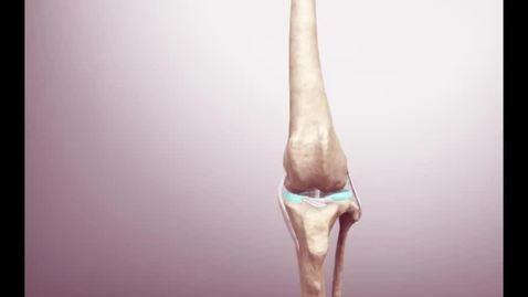Thumbnail for entry VM 516-Canine stifle anatomy Video presentation