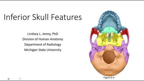 Thumbnail for entry Inferior Skull Bones & Features