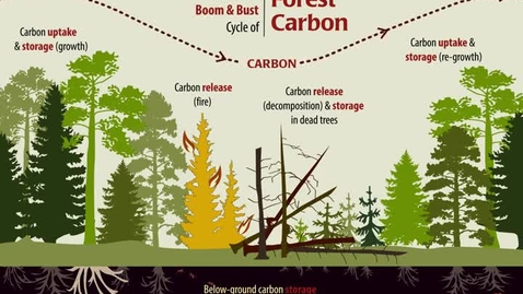 Thumbnail for entry The Natural Boom & Bust Cycle of Forest Carbon