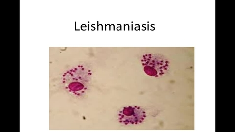 Thumbnail for entry WEEK-SIX-HM-881-PATHOG-LEISHMANIASIS