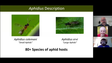 Thumbnail for entry Bug Bites! Session 2: Aphidoletes and aphid parasitoids - 13 Oct 2020