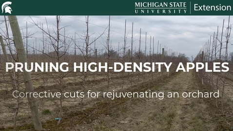Thumbnail for entry Pruning High-Density Apples - Corrective Cuts for Rejuvenating an Orchard