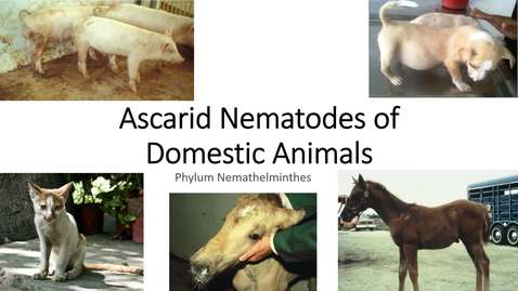 Thumbnail for entry VM 530-Ascarid Nematodes of Domestic Animals -Phylum Nemathelminthes-Mansfield