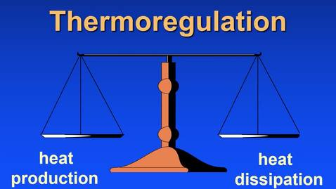 Thumbnail for entry ANS 445 Schott-Lecture 3-Thermoregulation
